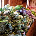 Choux et brocolis