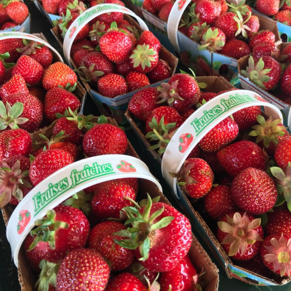 fraises-1.jpg