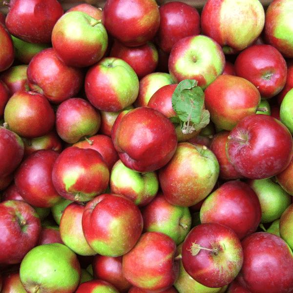 pommes.png